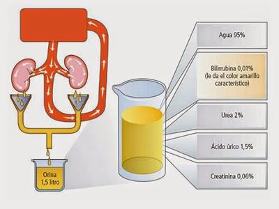 clean catch urine instructions pdf