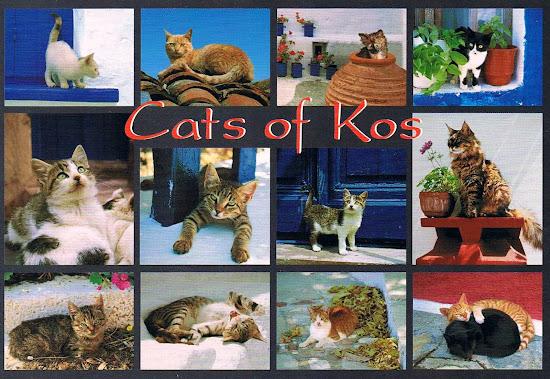 cats of greece, kos pocztówka
