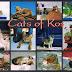 Cats of greece, czyli koty, kozy, wróble i inne zwierzeta na wyspie Kos