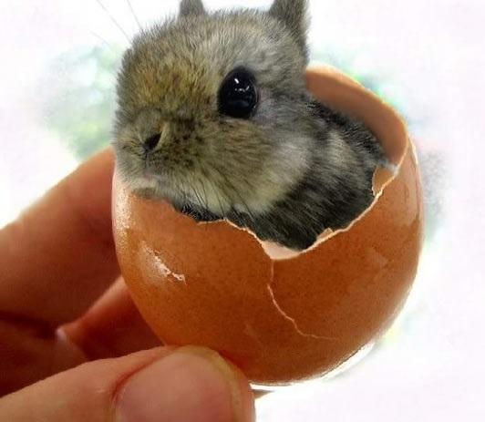 Easter Bunny! O Verdadeiro Coelho da Páscoa