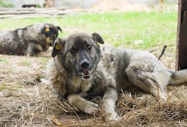 Собака Юта в ожидании любящего хозяина