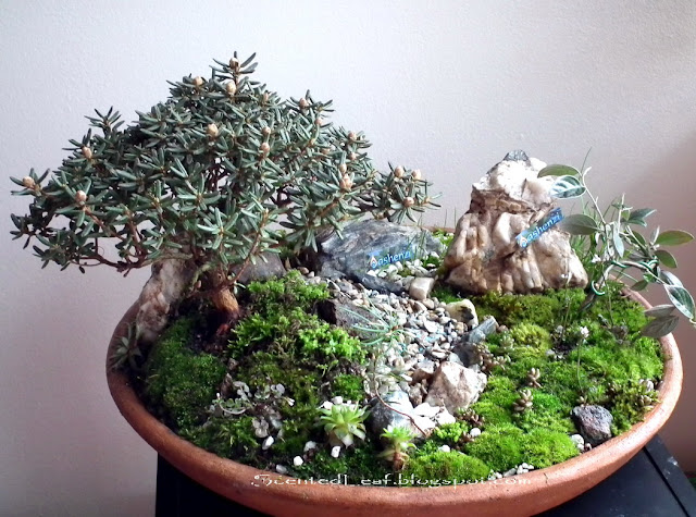 Saikei with PJM rhododendron bonsai and Ashenzi firm's logo