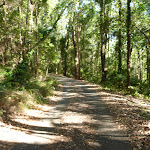 Trail on a sunny day in Blackbutt Reserve  (399949)