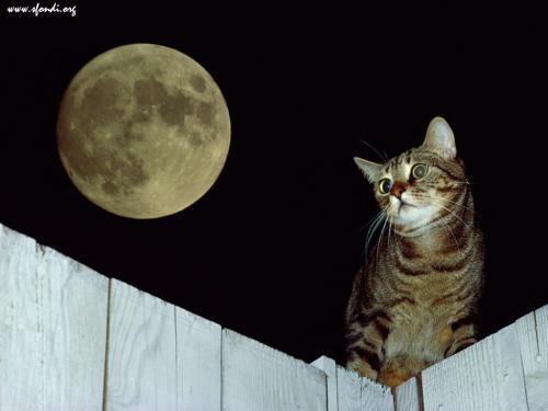 Il gatto e la luna