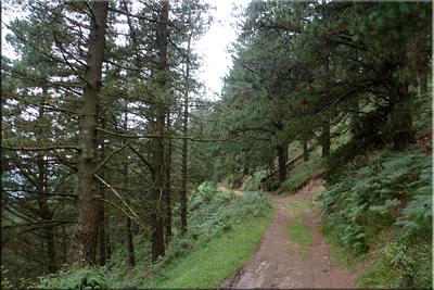 Descenso por el pinar