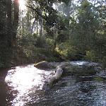 Manning River