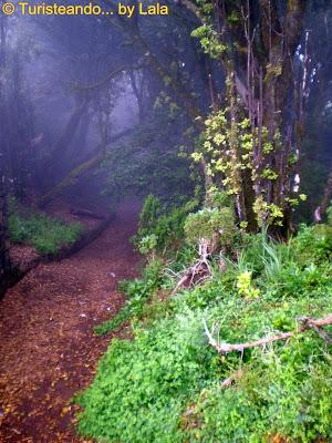 Senderos Poesia Anaga, Tenerife