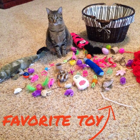 favorite cat toys