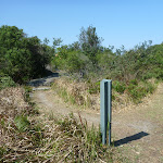 Henry Head Track near La Perouse (308936)