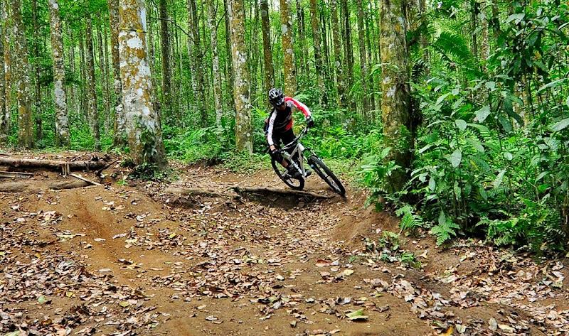Track Hutan Lindung Bedugul Mirip Tutur - Welang