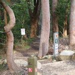 Arrow Posts near Bradfield Rd (54515)