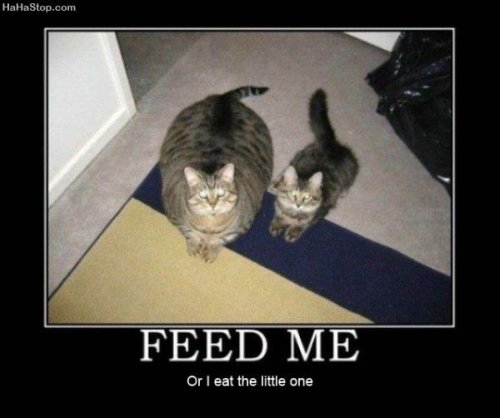 photo of a fat cat and a skinny cat. Feed me or I eat the little one