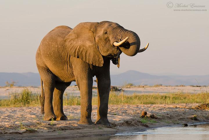 elephant_river_2_ManaPools_2012.jpg
