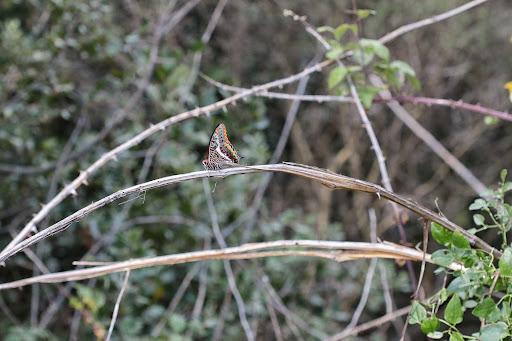 Maçanet de la Selva, E, 2014