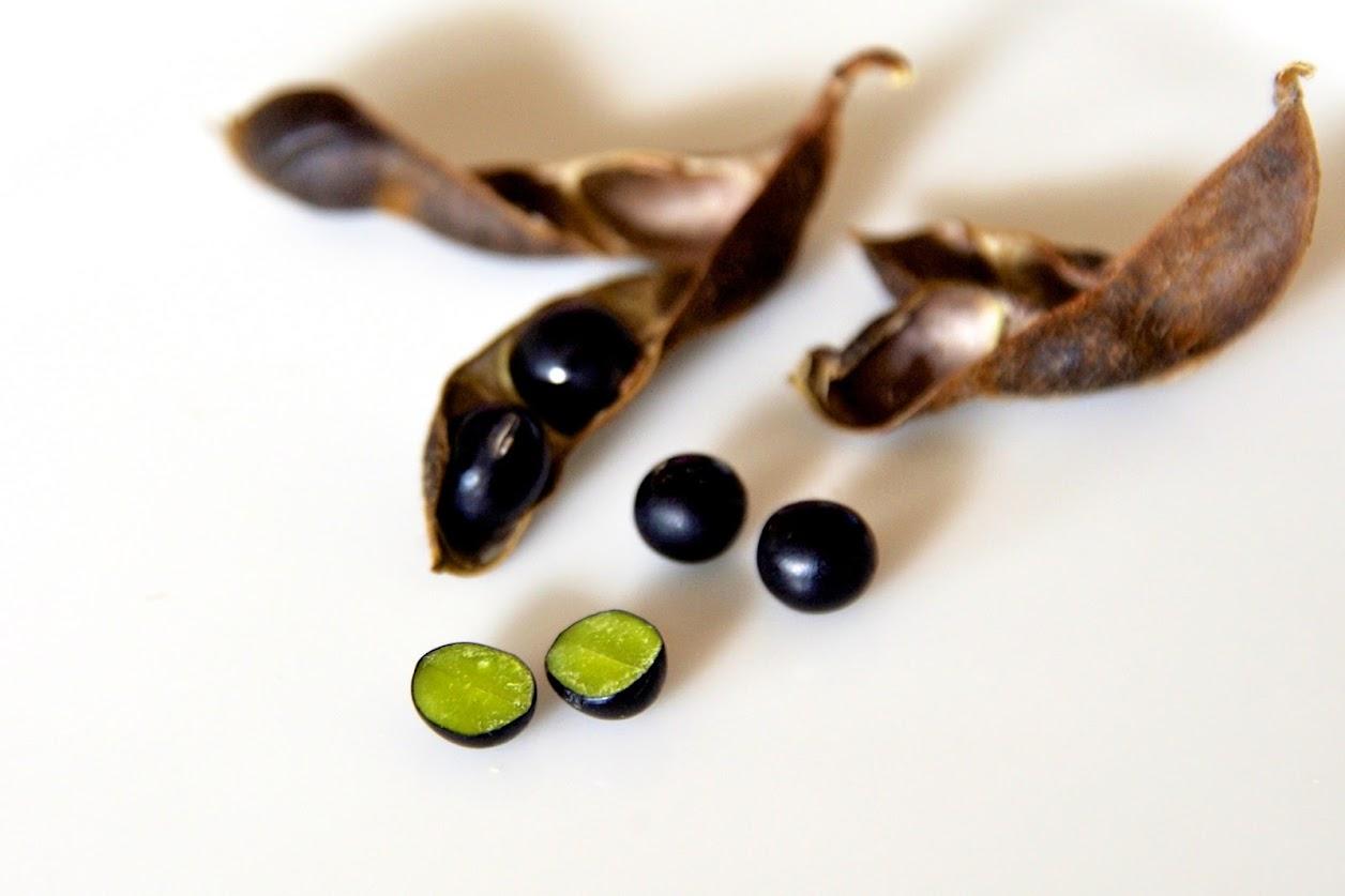 種皮は光沢のある黒色、子葉(種皮を剥いだ子実)は緑色
