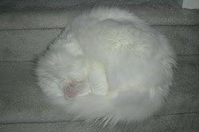 Monty asleep