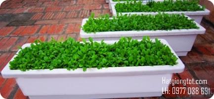 Hướng dẫn cách trồng rau sạch tại nhà