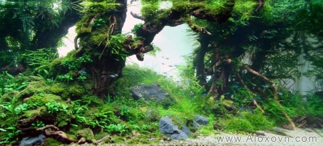 phông nền hồ cá rồng, phong nen ho ca canh 15