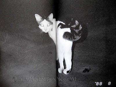 Nobuyoshi Araki Cat Nobuyoshi Araki Chiro 6
