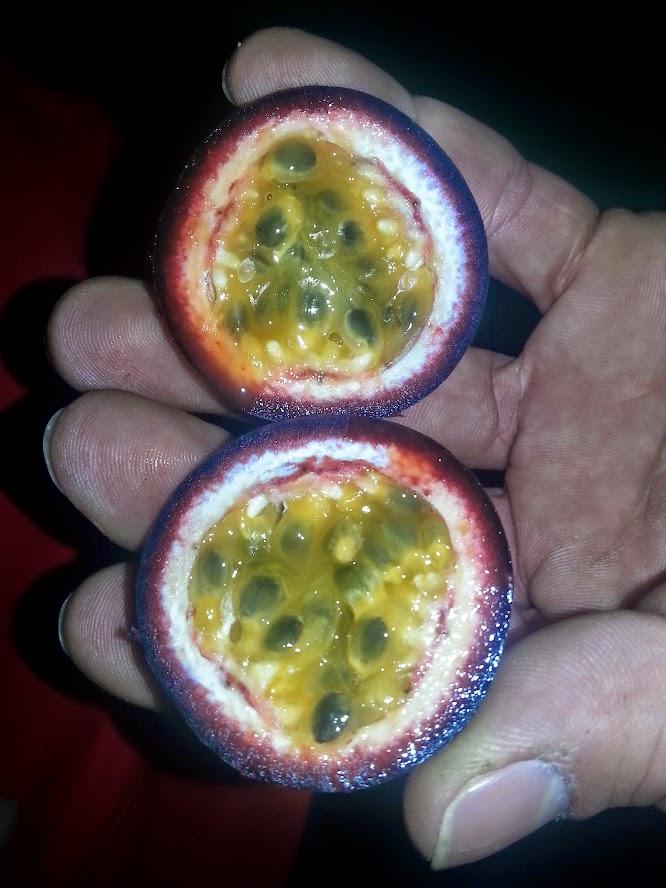 Petit résumé des Passifloras les plus résistantes - Page 2 20150224_172544