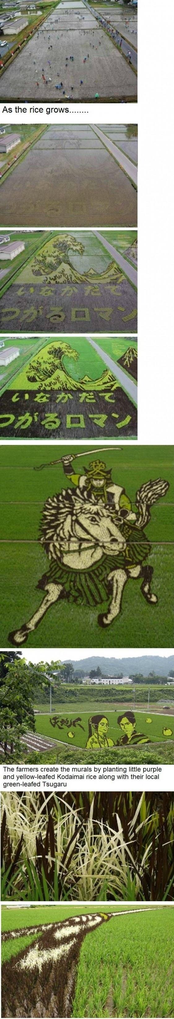 Mind-blowing Rice Fields In Japan