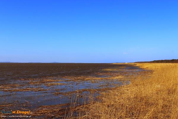 nad jeziorem Łebsko