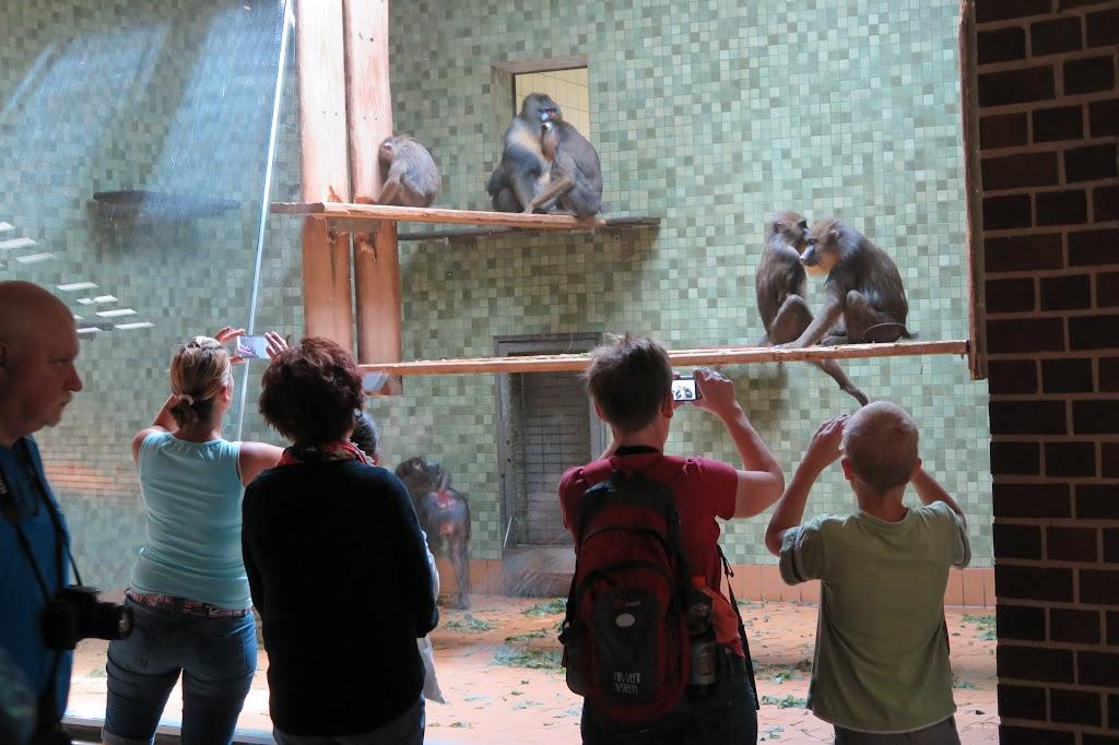 Ob es den Affen hier gefällt?