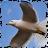 Kampanath Kappago avatar image