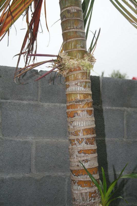 Futur jardin d'orchidées!!! - Page 2 IMG_3769