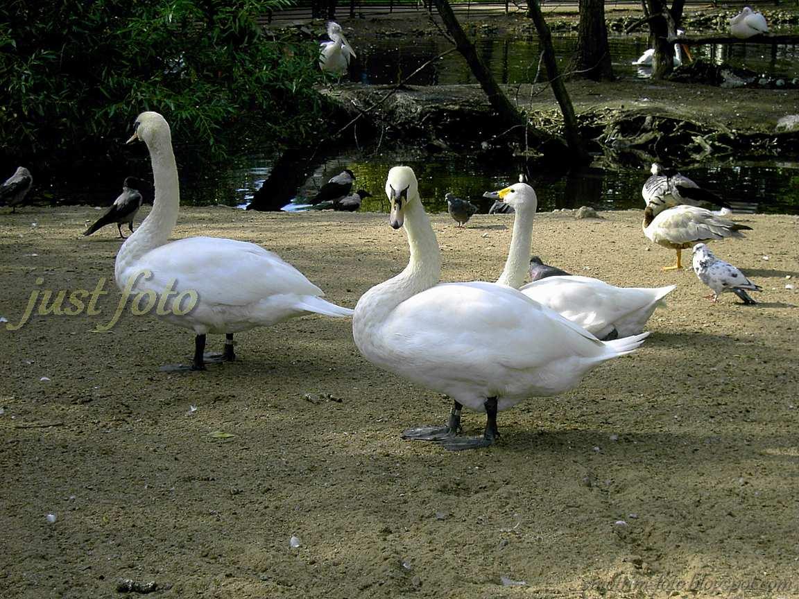 Птичий базар зоопарк Санкт-Петербург фото