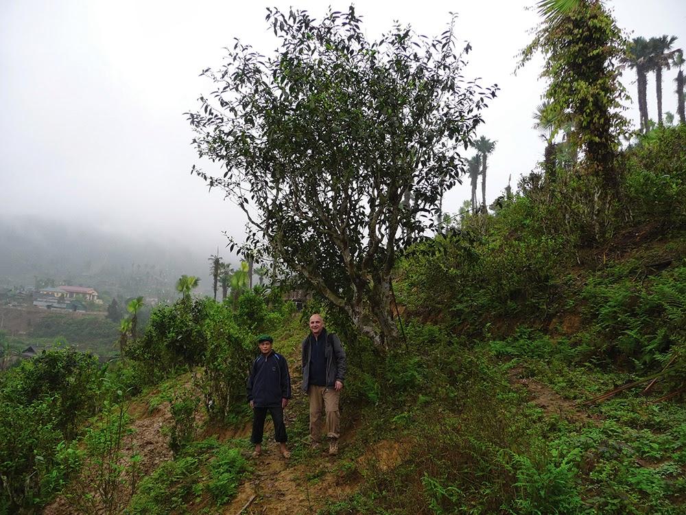Ареал произрастания чая – по большей части горные склоны