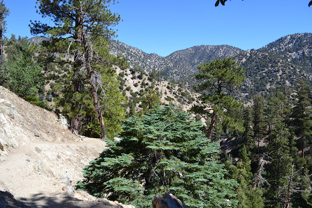 a wind of trail as it passes along Buckhorn Peak