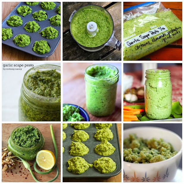 collage of 9 images of garlic scape pesto recipes, part of the garlic scape recipe round up