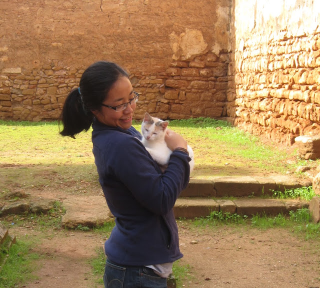 Cats in Chellah, Rabat, Morocco