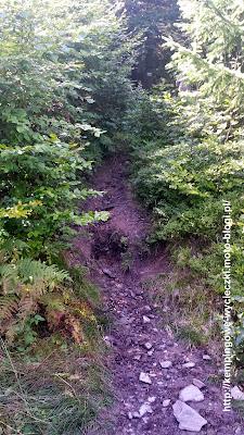 zielony szlak na Orlicę, najwyższy szczyt gór Orlickich