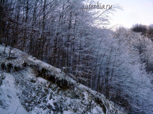 Леса и замёрзшие источники