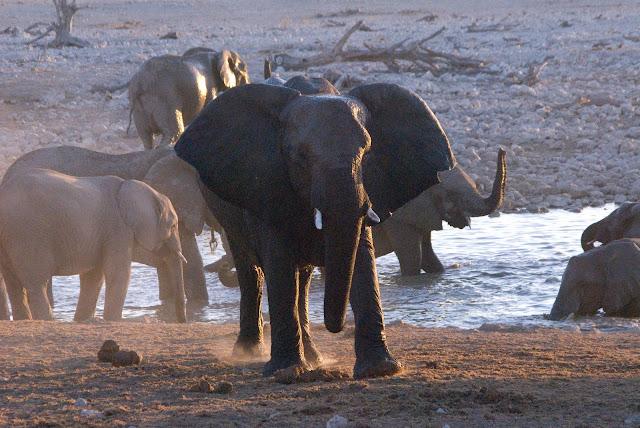 أفضل ما في أفريقيا  Best of Africa Namibia_090907111618