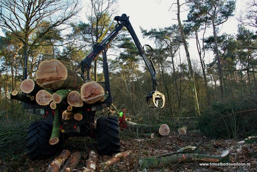 Houtoogst in de bossen van overloon 17-01-2012 (19).JPG