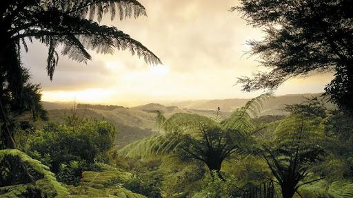 Lush Forest, North Island, New Zealand.jpg