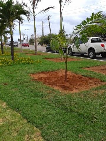 Natal: UFRN e prefeitura firmam acordo para o plantio de 20 mil árvores na cidade