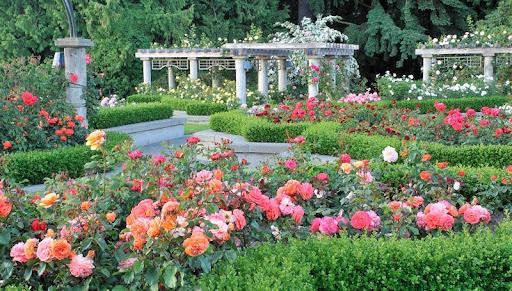 Rose Garden, Vancouver, British Columbia.jpg