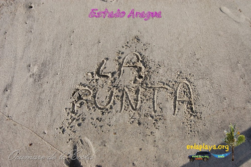 Playa La punta, Sector Ocumare de la Costa, Estado Aragua