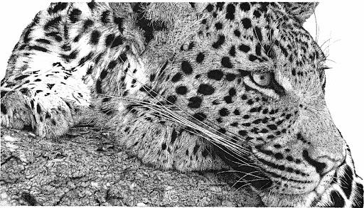 leopard-2015-01-27-19-01.jpg