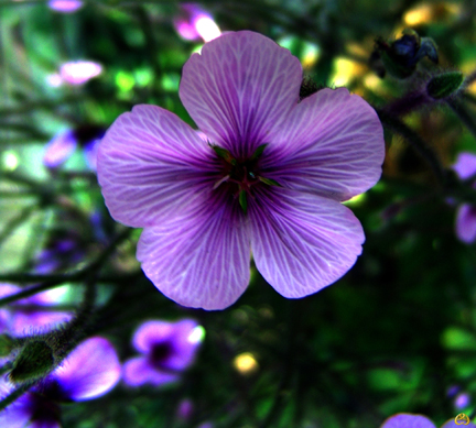 Bunga, Bunga Cantik, Cute Flower, Purple Flower, Bunga Ungu, No Labels