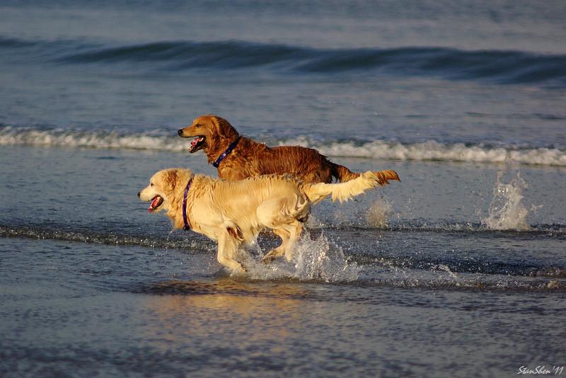 I LOVE BALI DOGS