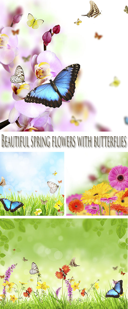 Stock Photo:  Beautiful spring flowers with butterflies