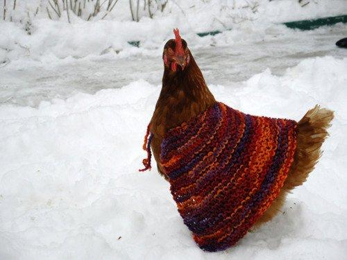 Knitting Pattern Hen Jumpers : Inside Storey: No More Frozen Chicken!