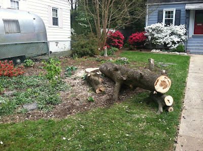 I admit it, I hated that tree.