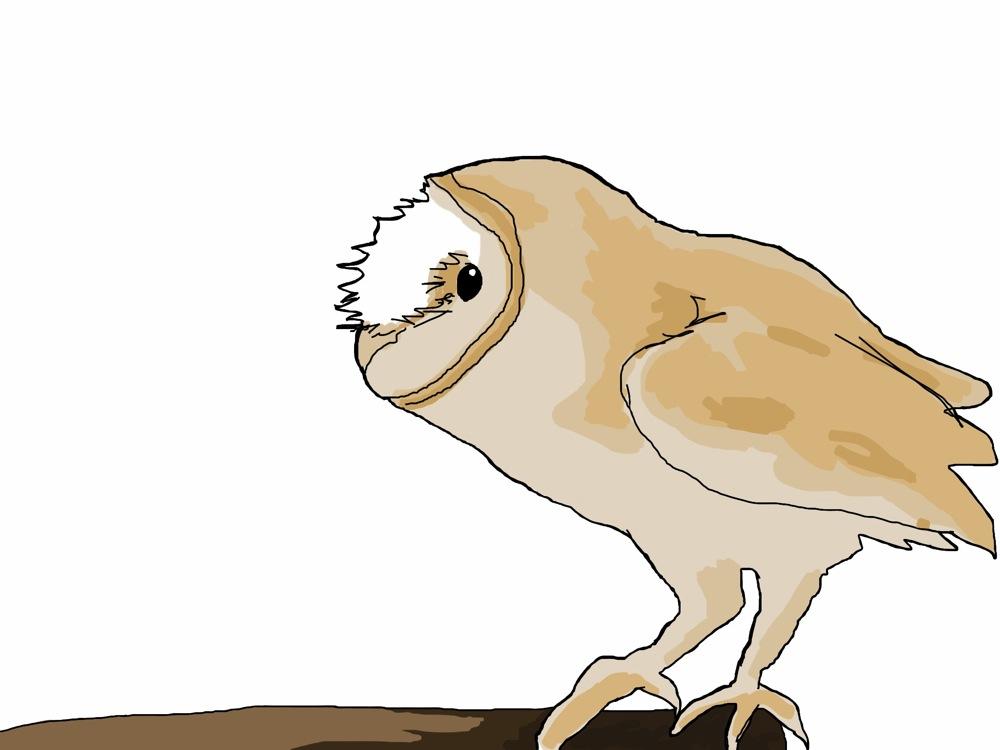 Owl drawing on iPad