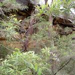 Pindar Cave hidden behind trees (19683)